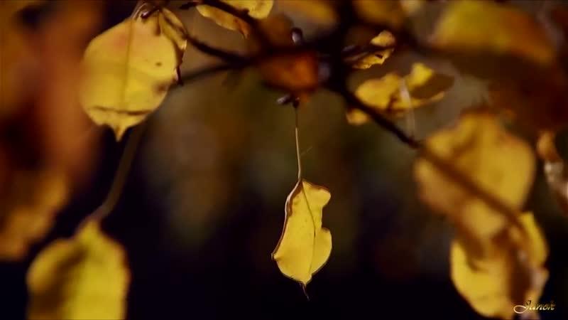 Улетели листья с тополей. Сергей Таюшев