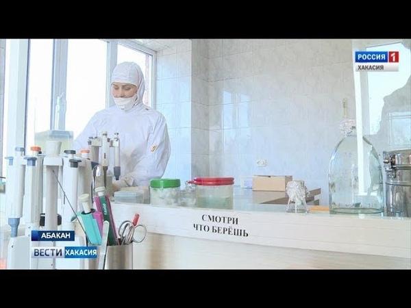 Жители Хакасии все чаще отказываются от прививок против бешенства 15 03 2019