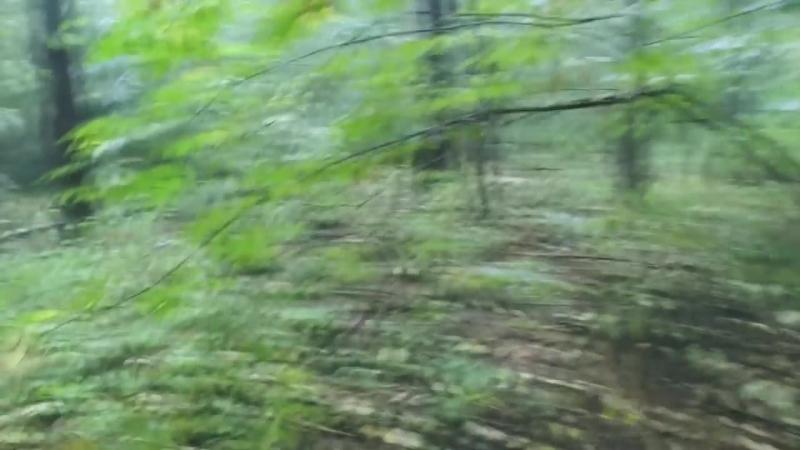 VLOG Мистический лес Грибы Выживание в одиночку ЕТТИ Туризм Путишествие Мысля от Эдгара