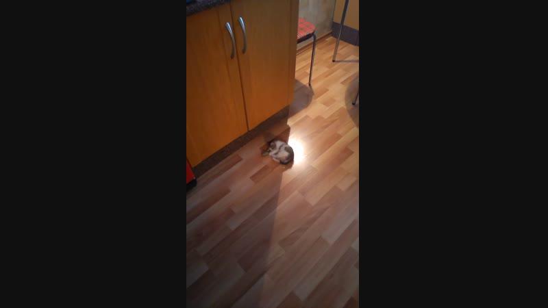 Трикси и мышка