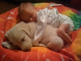 Golden Retriever Puppies and Babies always are best friend - Puppy and baby compilation
