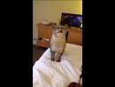 котик мило чихает