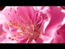 Аварская Песня 2017 Nature 2017_VIDEOMEG.mp4