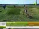 Ямальцы стали победителями Всероссийских сельских спортивных играх