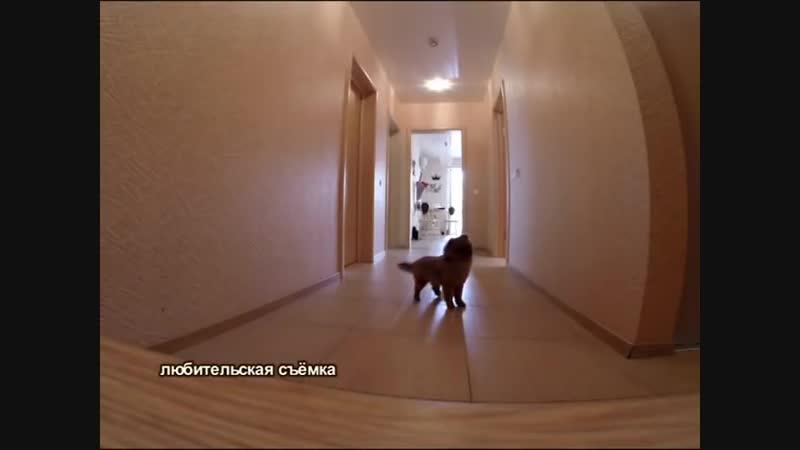 Как отучить собаку скулить и лаять, когда она остаётся дома одна.