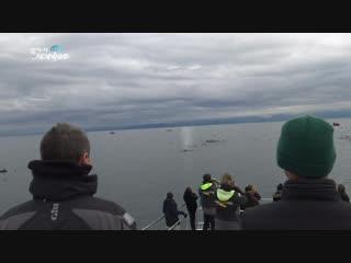 【K】Canada Travel-Victoria_Humpback whale_Wildlife Tours