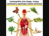 Попробуйте эти травы, чтобы сохранить здоровье своих органов