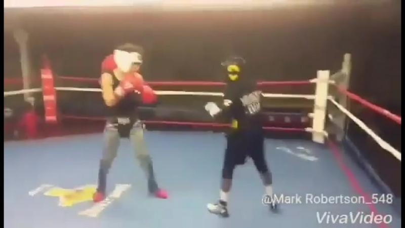 Подростковый американский боксёр