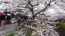 Moments in Kyoto - Sakura | Cherry Blossoms in Kyoto Japan 京都の桜 着物美人と夜桜