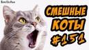 Смешные коты и кошки 2018 Приколы с котами и кошками 2018 Funny Cats