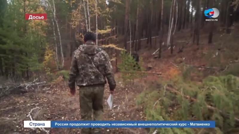 Сенаторы призвали изменить законодательство в сфере вырубки древесины