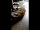 Улюблений рудий кіт
