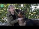 «Собакам все равно, под каким флагом случилась беда»- приют «ПИФ» в Донецке спасает жизни
