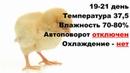 Лучший режим инкубации куриных яиц в БЫТОВОМ инкубаторе Таблица инкубации цыплят