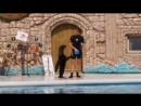Дельфинарий Адлер 2 Танец котика