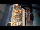 соревнования по пляжному бодибилдингу Д Атлетик Санкт Питербург