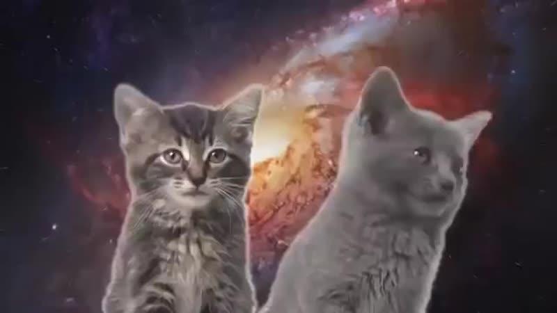 Песня мяу, мяу исполнители два котёнка.mp4