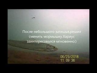 Подводные съемки хариуса в глухозимье(январь 2019).