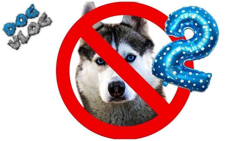 DOGVLOG 20 ПРИЧИН ПРОТИВ ХАСКИ 2 ЧАСТЬ Хаски Бандит Говорящая собака