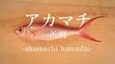 アカマチ〈浜鯛〉のさばき方 - How to filet Ruby Snapper -|日本さばけるプロジェクト