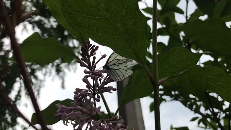 Летим как бабочки 🦋