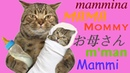 Funny Cats 16.Смешные Коты 2019, Кошки 2019.Mommy.До слез.Мама.lol
