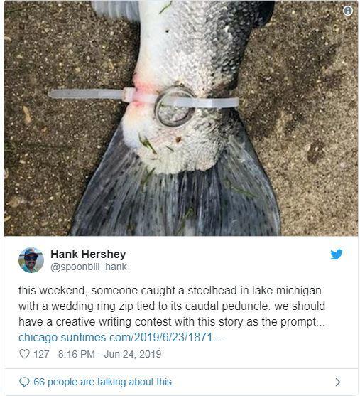 Рыбаки выловили форель с обручальным кольцом на хвосте