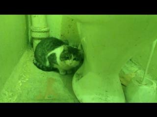 Эльдар Богунов смонтировал видео про туалет!
