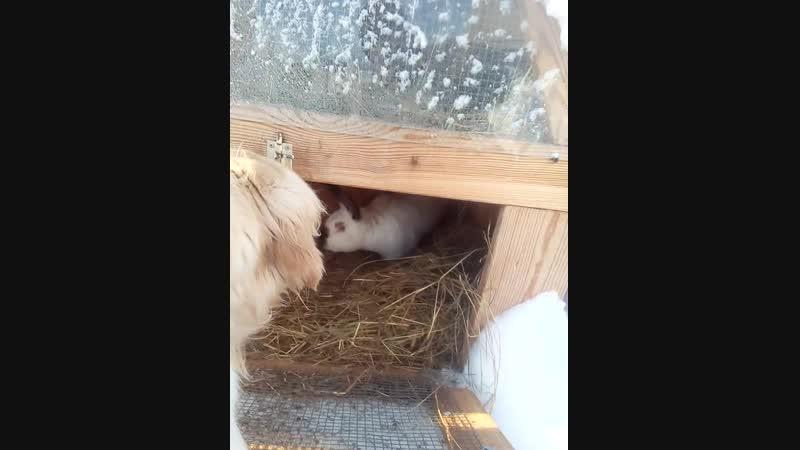 Лион и кролик