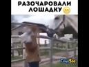 Разочаровали лошадку
