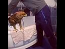 Чеченец моет орла дома (Чечня)