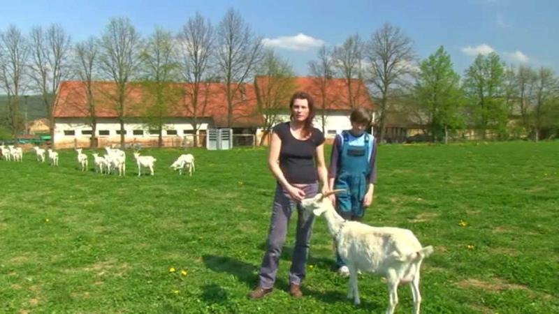 3 Kozi farma Skryje