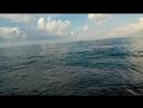 Рома ВПР - Рой sea cover