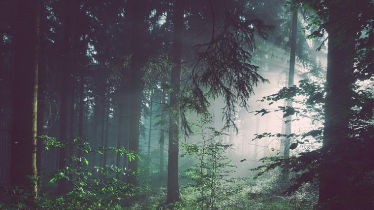 В Томском районе спасли мужчину, заблудившегося в лесу