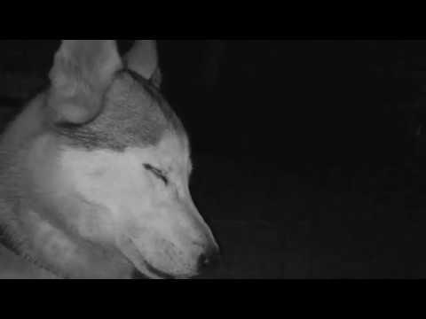 MATRANG КИНО OFFICAL MUSIC VIDEO
