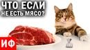 ЧТО ЕСЛИ не есть мясо? ИФ