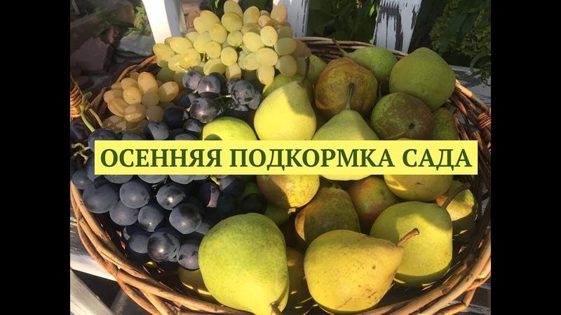 Осенняя подкормка сада. Заправляем грядки. Программа Дачные сезоны 15.09.18.