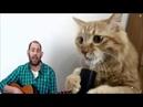 Котозависимость - Семён Слепаков - мам я котоман-крампапулька