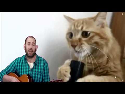 Котозависимость Семён Слепаков мам я котоман крампапулька