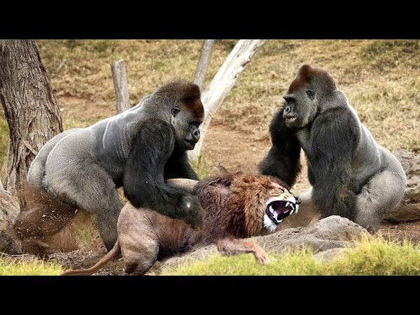 LIVE: Wild Discovery Animals - Most Amazing Moments Of Wild Animal Fights - Animals Documentary 2018