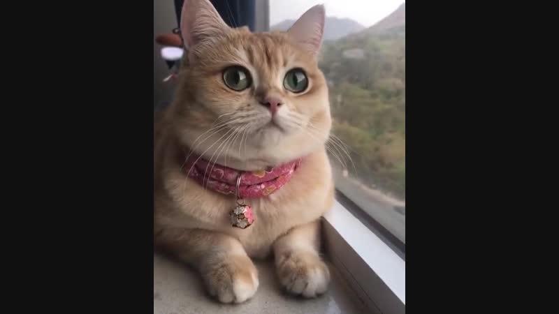 Какие глазки у котенка