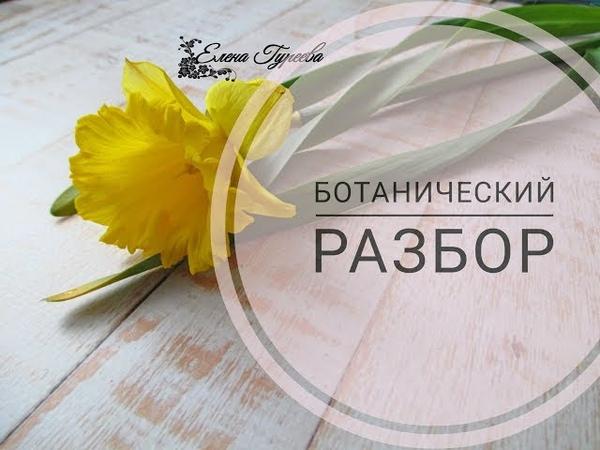 Нарцисс.Разбор цветка.Видеоразбор цветов от Елены Гуреевой.