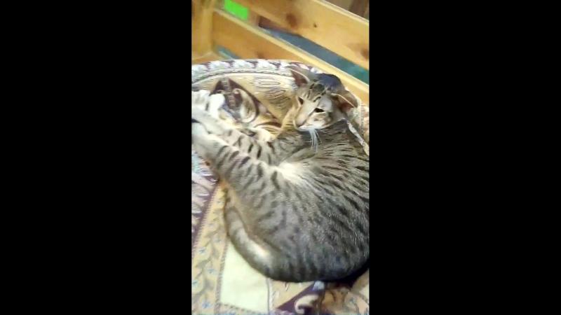 Такая угарная кошка.. 😅😅😅