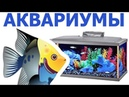 Тверь - Магазин АКВАРИУМ (аквариумы, рыбки, корма)