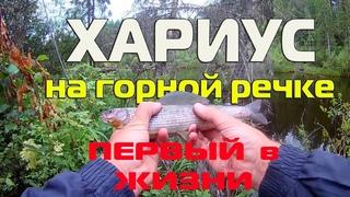 ХАРИУС и Таймень на горной речке. ВПЕРВЫЕ В ЖИЗНИ!!! Рыбалка на Урале/Grayling and Taimen.Fishing