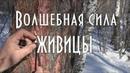 Волшебная сила живицы / Тайга моя заветная / 17.03.2019
