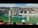 представление моржей