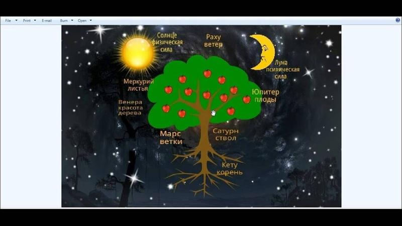 Ведическая астрология Астрологическое древо