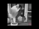Strange paw