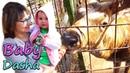 Зоопарк для детей / МЕДВЕДЬ СЪЕЛ ВСЕ ПАЛОЧКИ / детское видео / канал для детей Baby Dasha